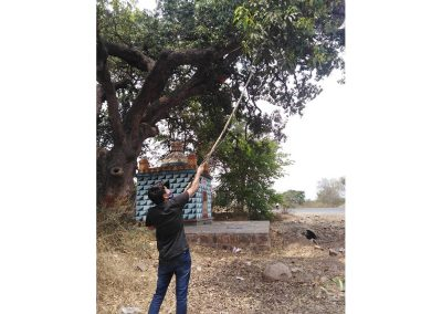 Mango Picker With Visual Inspection