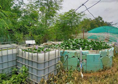 Recirculating Aquaculture System (RAS)
